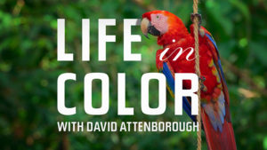 Life in Color with David Attenborough is streaming this Earth Day, only on Netflix!